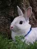 Bugsy the dwarf rabbit by Magnolia