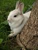 Bugsy by Magnolia tree