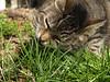 Munching Grass- mmmm
