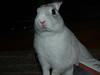 Bugsy VW Rabbit, Trudy's dwarf rabbit