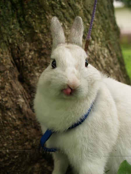 Silly Wabbit!