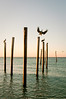 Pelican Poles