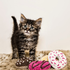 Kitten Donuts 12x12_DSC1125