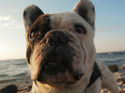 Gimli on the Beach. Photo: Martin Bager