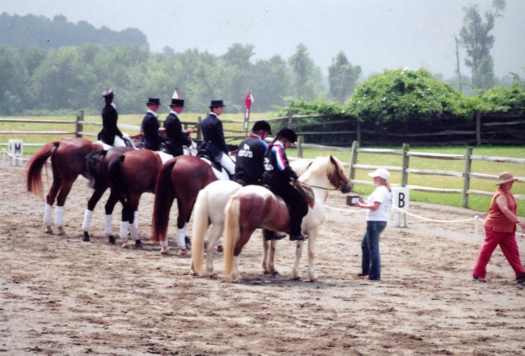 Big horses and little rumps!