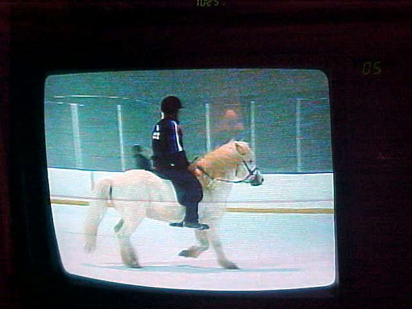 Sómi's first time on television.  Not bad for a farmer's riding horse from Skagafjordur!