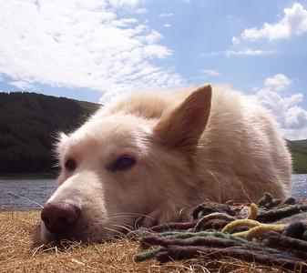 Poppel relaxing.