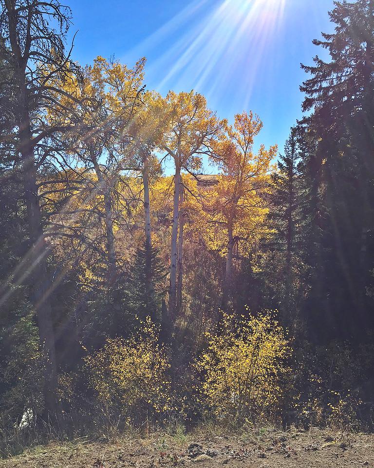 Fall Light in Yellowstone