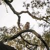 OwlStillSilver-7