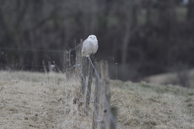 Owl outing 1_01 13 14_3364