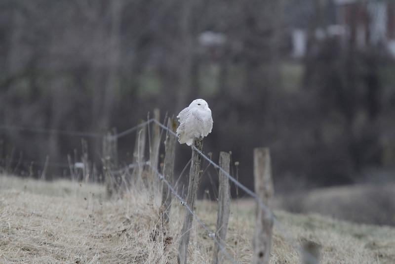 Owl outing 1_01 13 14_3449