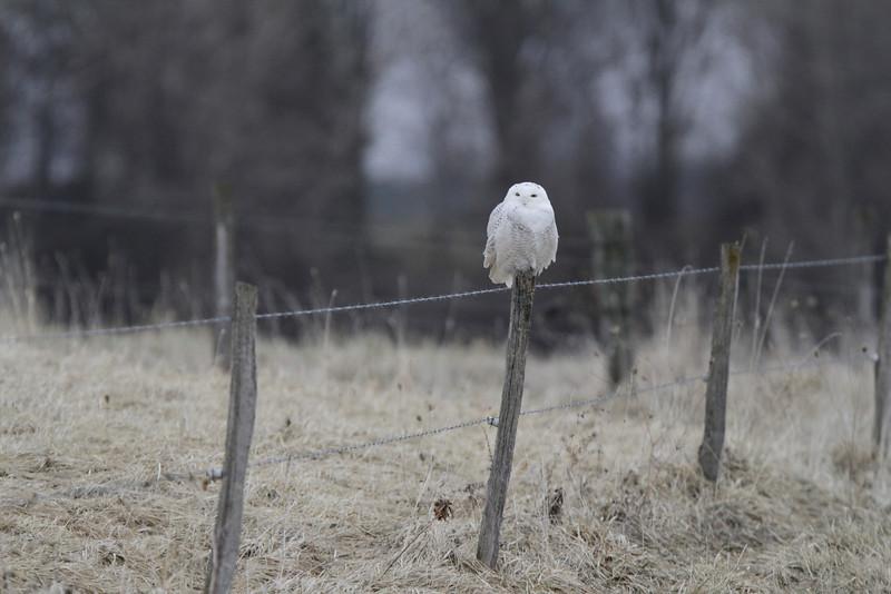 Owl outing 1_01 13 14_3435