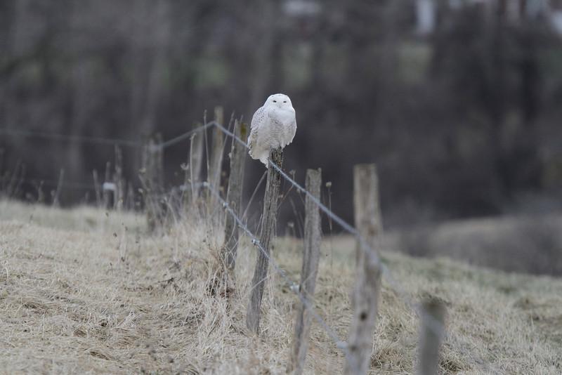 Owl outing 1_01 13 14_3441
