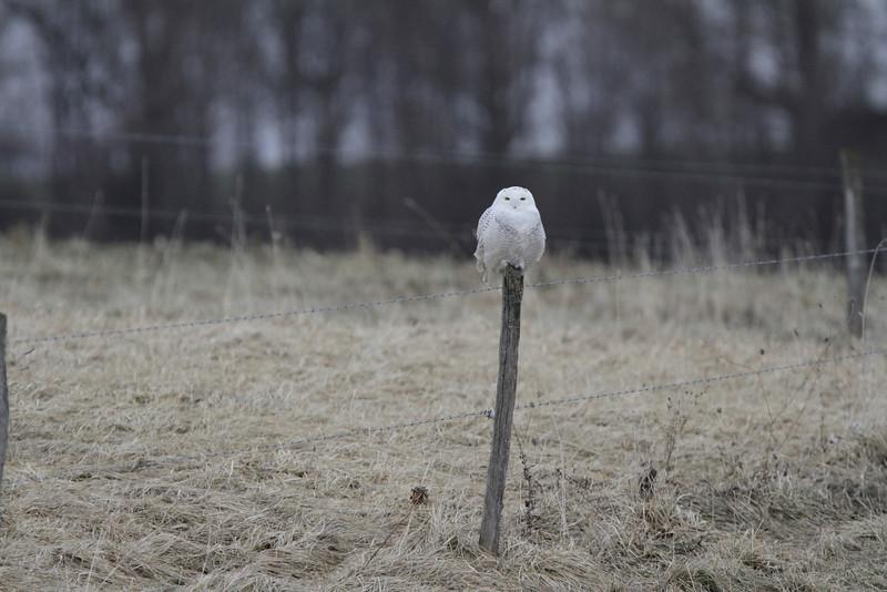 Owl outing 1_01 13 14_3312