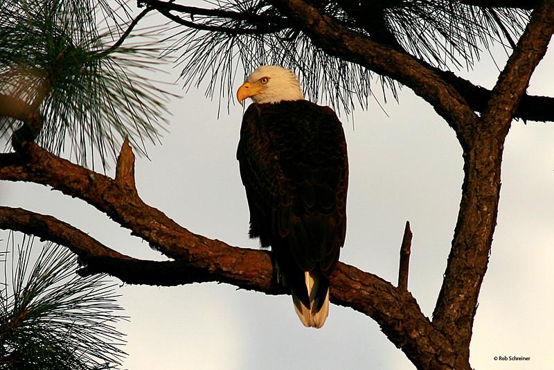 Punta Gorda, FL 12/07