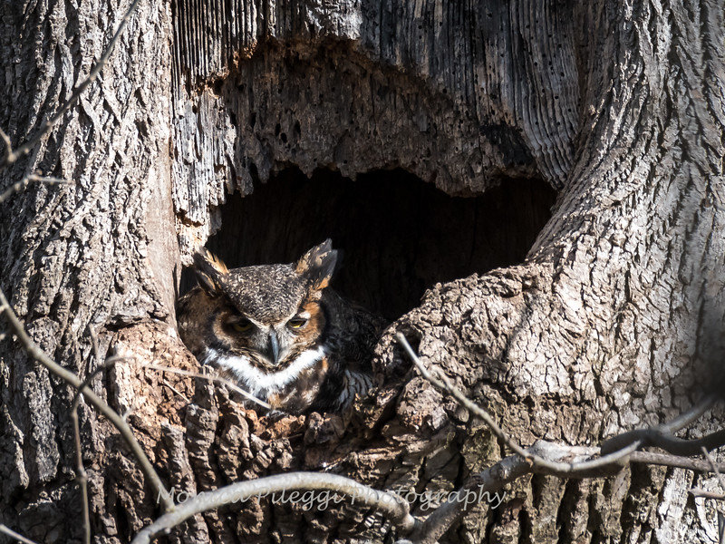 Owls-4-March-2017-8277