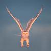 Snowy Owl in golden light.