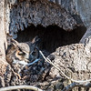 Owls-4-March-2017-8207