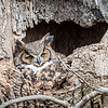 Owls-4-March-2017-8409