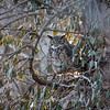 Back-yard-birds-9-March-2017-9366