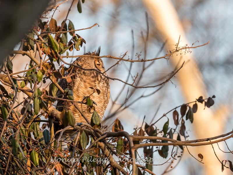 Back-yard-birds-9-March-2017-9381