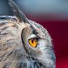 Owls-12 Nov 2016-5682
