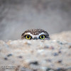 I Am Watching You