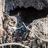 Owls-4-March-2017-8204