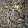 Back-yard-birds-9-March-2017-9368