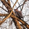 Back-yard-birds-9-March-2017-9399