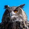 Owls-12 Nov 2016-5919