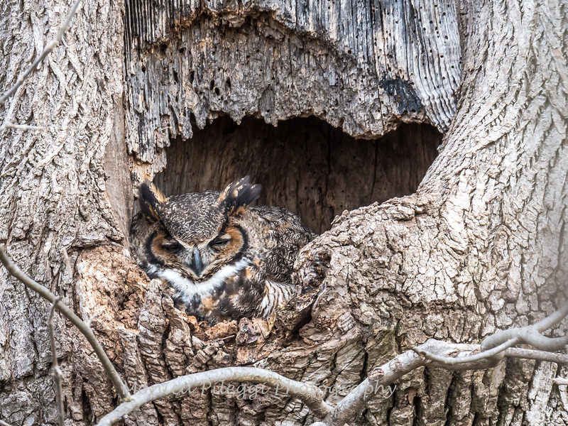 Owls-4-March-2017-8374