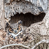 Owls-4-March-2017-8381