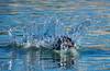 Water trials