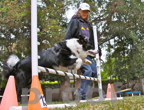 ROCKY! jumps a hurdle as his owner Lynda Cohen watches