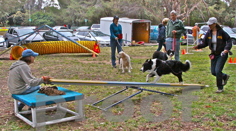 ROCKY! takes off on teeter todder as dog trainer Nancy Lovendosky encourages him and his owner Lynda Cohen runs with him