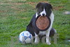 ROCKY! Ready To Play! He can play frisbee, dribble the ball and play catch