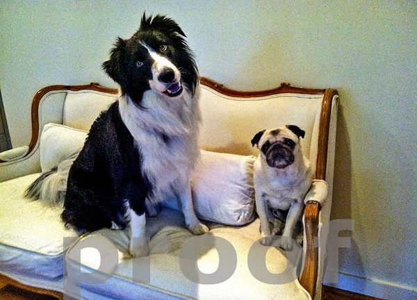 Rocky and Harley on Love Seat