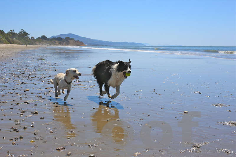 ROCKY! and Pal Running on Summerland Beach