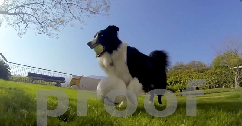 ROCKY DOES HIS AMAZING BALL DRIBBLING:  WATCH THE VIDEO TWO IMAGES FROM THIS ONE...