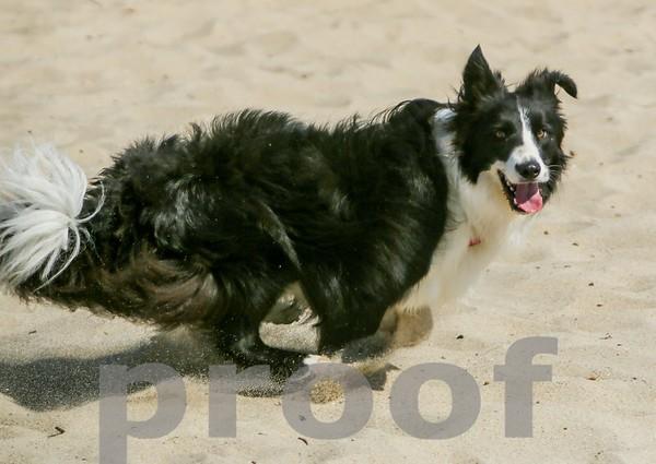 Rocky loves running on the beach!