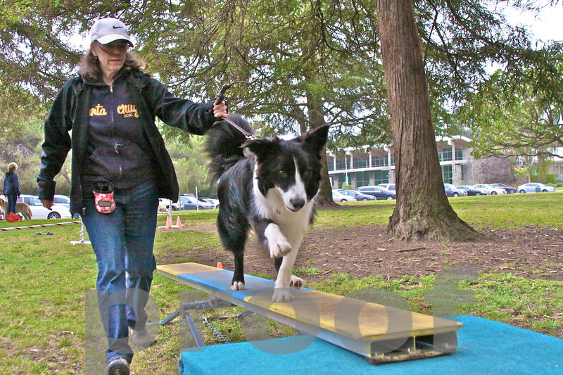 ROCKY! walks the teeter todder in Palisades Park