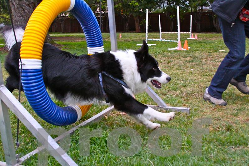 ROCKY! jumps through tire jump