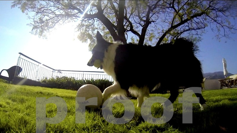 ROCKY THE SOCCER BORDER COLLIE IN ACTION...WATCH THE VIDEO NEXT IMAGE...