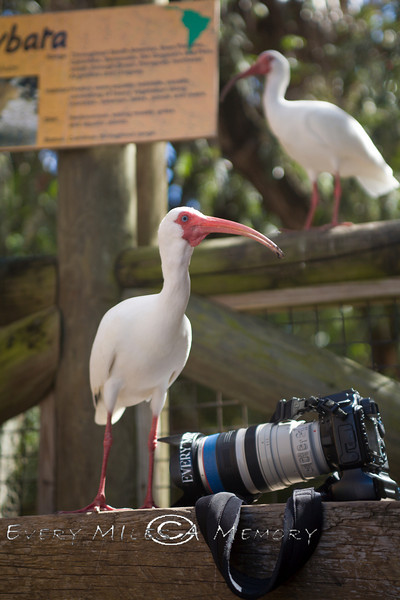 Just hanging out with the Camera peeps - Palm Beach Zoo