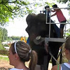 Sheila and her brave boy take a quick jaunt on Nimba the gentle elephant
