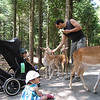 Feeding the deer.  Jaden looks on a little cautiously while Cyane gets down and up close.
