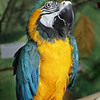 Kelli, is a Blue-and-Gold Macaw.  She's looking for a home.