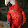 Savannah, a Green-Winged Macaw, is looking for a home.