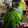 Cleo, a Nanday Conure, has a new home.
